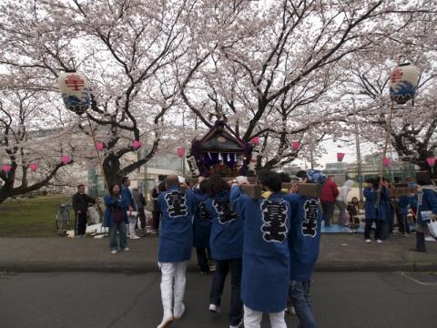 印刷局小田原工場桜並木2