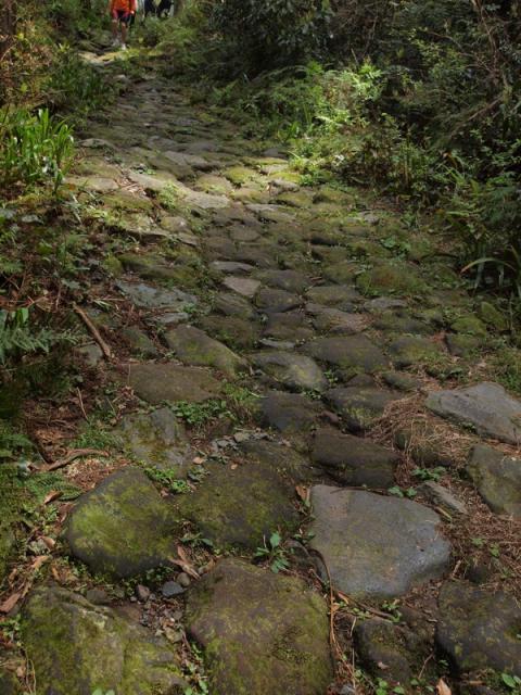 箱根旧街道 石畳