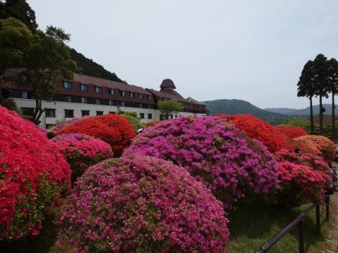 山のホテル つつじ