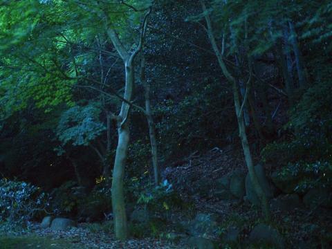 湯河原温泉 蛍の宴