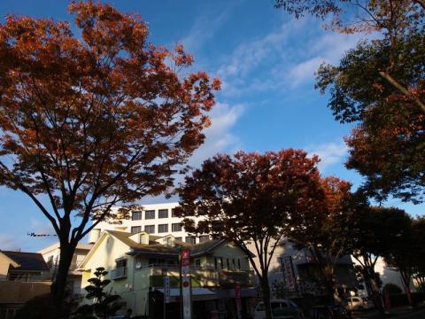 ケヤキ通り 紅葉