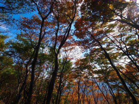 矢倉岳の紅葉