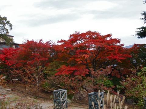 強羅公園 紅葉
