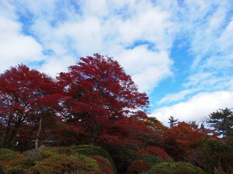 蓬莱園の紅葉