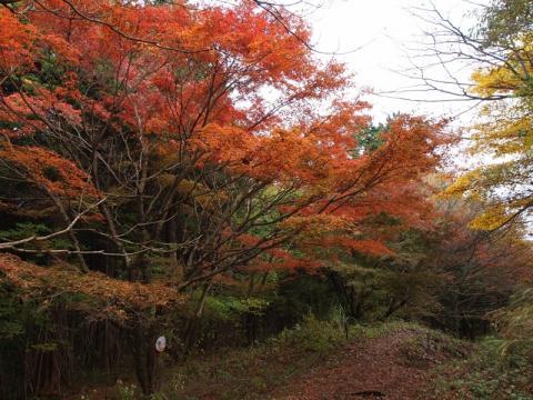 湯坂路の紅葉