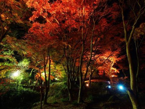 熱海梅園 紅葉ライトアップ