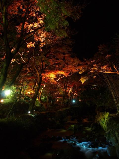 熱海梅園紅葉ライトアップ