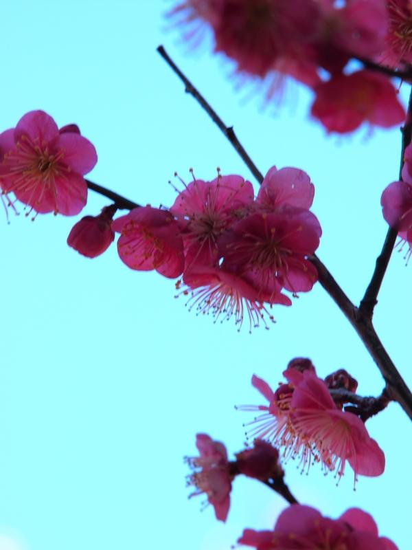 20130216小石川後楽園