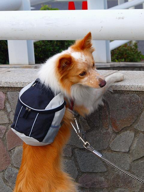 s-iyppPB087799江ノ島犬