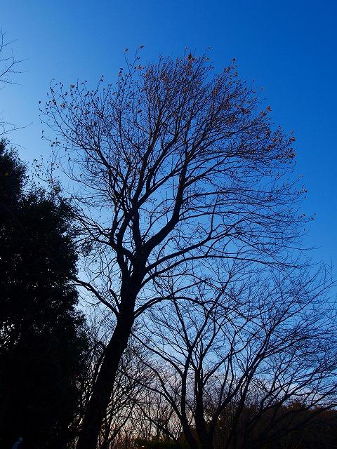 s-iyppPB158147枯れ木