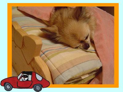bed_top1.jpg