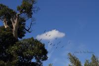 sky009.jpg