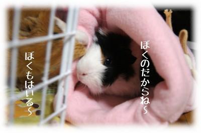 1_20110528105708.jpg