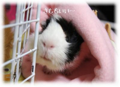 2_20110528105708.jpg