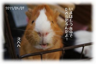 3_20110530131919.jpg