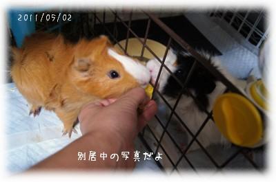 4_20110528183648.jpg