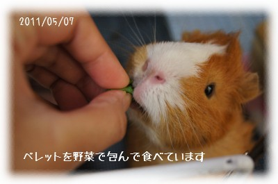 5_20110530131919.jpg