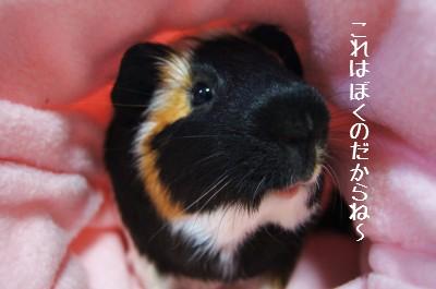 6_20110528105708.jpg