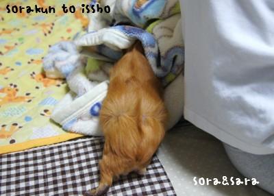 a2_20111115080314.jpg