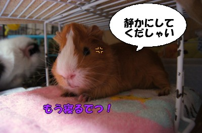 b1_20110409172657.jpg