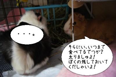 b1_20110409231953.jpg