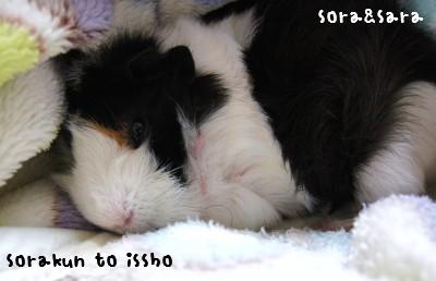 b1_20111115155516.jpg