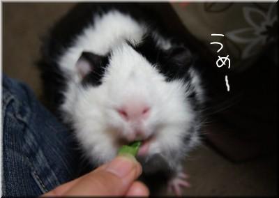 b4_20110507092742.jpg
