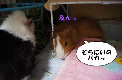 b5_20110409231953.jpg