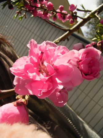 03_20100328101252.jpg