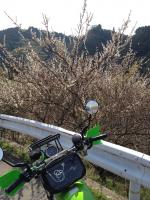 sakura_bike2.jpg