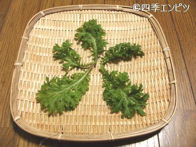 20110220 わさび菜収穫