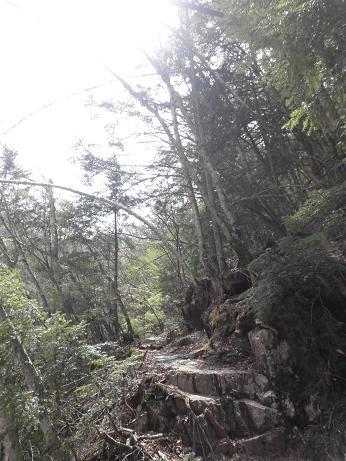 快適な山道