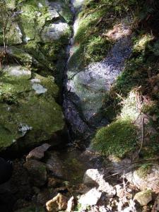 2009-11-03-054.jpg
