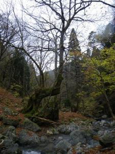 2009-11-21-053.jpg