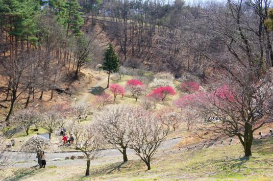 梅の里公園 外観
