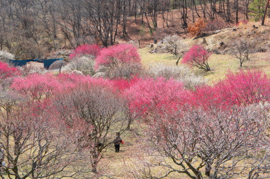 梅の里公園 全体