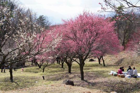 梅の里公園 お花見