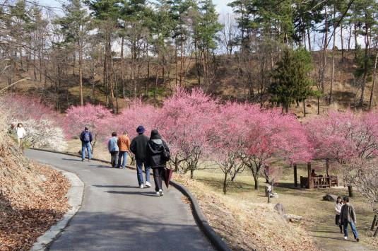 梅の里公園 遊歩道