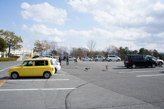 梅の里公園 駐車場