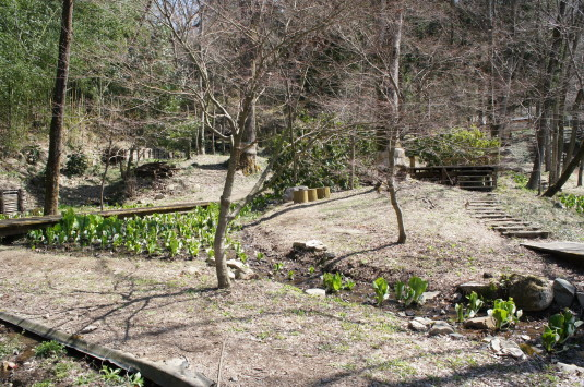 水芭蕉 藤垈の滝 園内