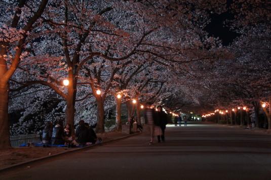 桜 小瀬スポーツ公園 桜並木