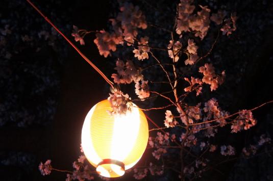 桜 小瀬スポーツ公園 提灯