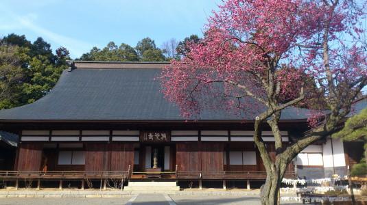 梅の花 放光寺 外観