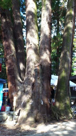 天神中条祭り 五本杉