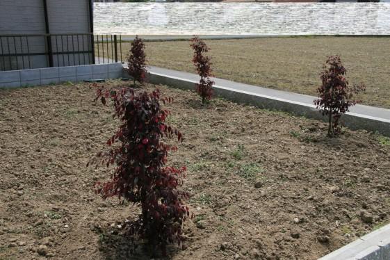 植栽 005