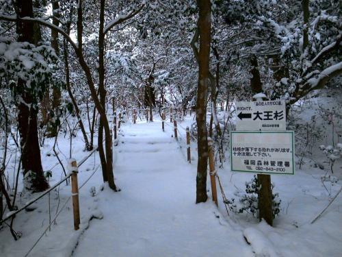 雪の行者杉2