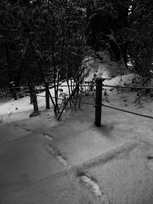 雪の行者杉4