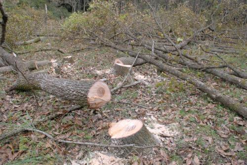 クヌギの木倒木