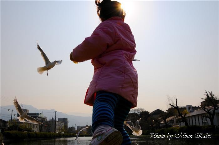西条市の野鳥 西条高校お堀端のカモメ(鴎) 西条市明屋敷 2009年2月2日