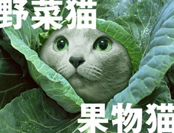 回顧猫14